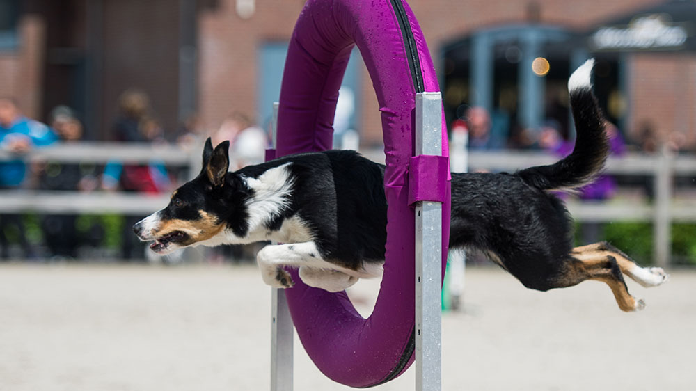 Agility article